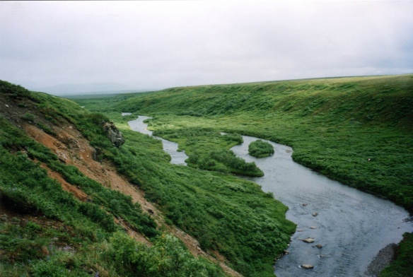Alaskan stream