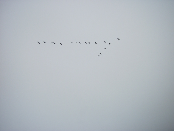 Geese were flying.  Should have brought the sky cannon.